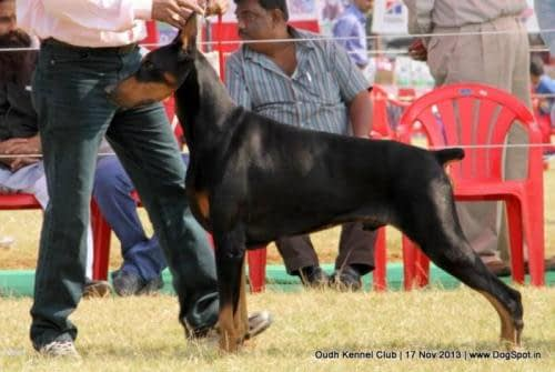 Lucknow Dog Show 2013
