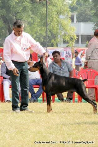 Lucknow Dog Show 2013
